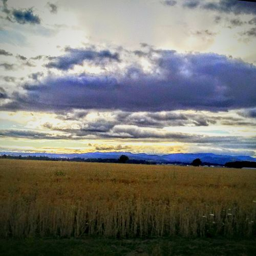 Heaven And Earth Loving Nature Looks Like A Painting One The Way Farm Landscape Countryside Sky And Clouds Sky_collection Cloud_collection  Greys And Tans I Want To Fly Summer 2016 Contrasting Colors