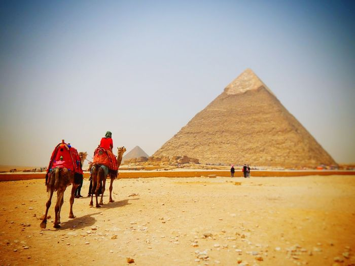 Camel Desert Travel Destinations Transportation Pyramid Sand Animal One Animal Triangle Shape Riding Adult Animal Themes Domestic Animals Travel Clear Sky Architecture Sky People Outdoors Day Freshness Nature