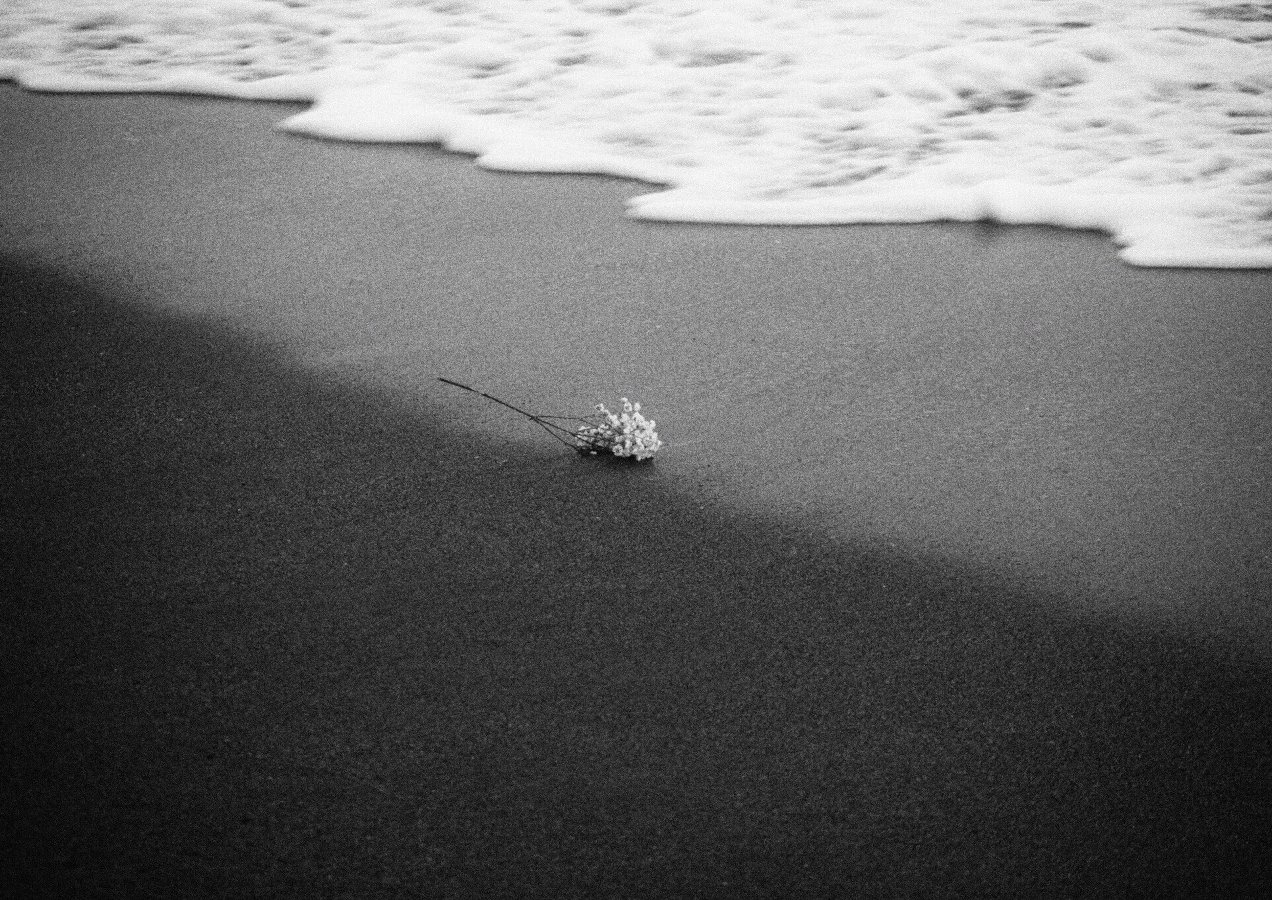 beach, nature, land, day, sea, sand, no people, water, one animal, high angle view, outdoors, animal, beauty in nature, animal themes, animals in the wild, tranquility, winter, animal wildlife