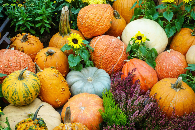 Various type of pumpkin Autumn Close-up Day Food Freshness Gourd Halloween Multi Colored Nature No People Orange Color Outdoors Plant Pumpkin Squash - Vegetable Vegetable