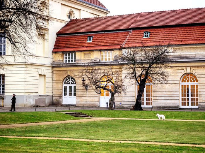 Building Exterior Architecture Built Structure Grass Bare Tree Outdoors Day Tree Real People Travel Destinations Sky Cultures Berlin Germany Olympus Capture Berlin City Charlottenburg  Architecture Dog