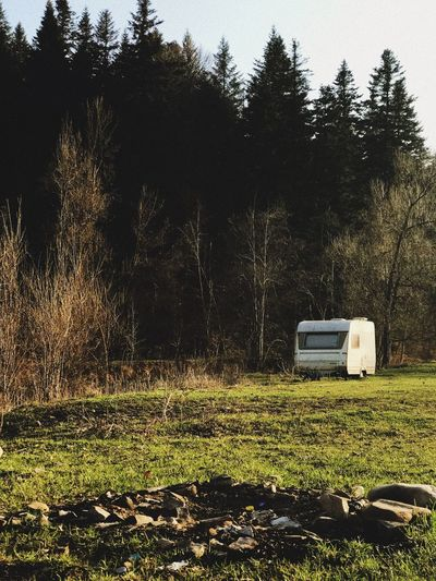 Campfire Forest Summer CAmping Van Camping