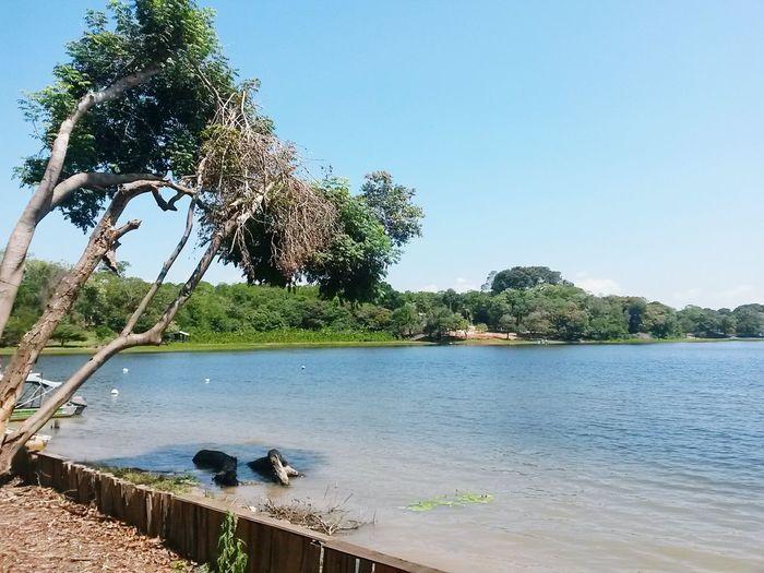 Amazonas Lago Do Serpa Itacoatiara