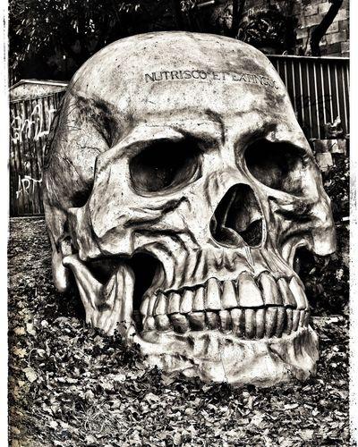 La Demeure Du Chaos Skull Face