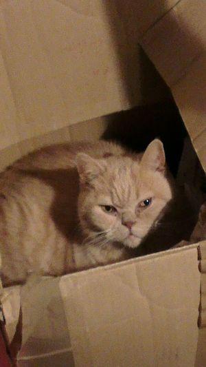 Cat Knut Knutschkugel