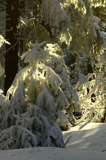 Beauty In Nature Close-up Cold Temperature Day Landscape Mountain Nature No People Outdoors Physical Geography Scenics Snow Sunlight Tranquility Tree White Color Winter