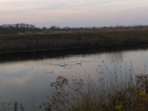 Omoljica Pond Serbia Animal Themes Animals In The Wild Beauty In Nature Bird Clouds Day Grass Lake Landscape Nature No People Outdoors Plant River Scenics Sky Sunset Swan Tranquil Scene Tranquility Vojvodina Water