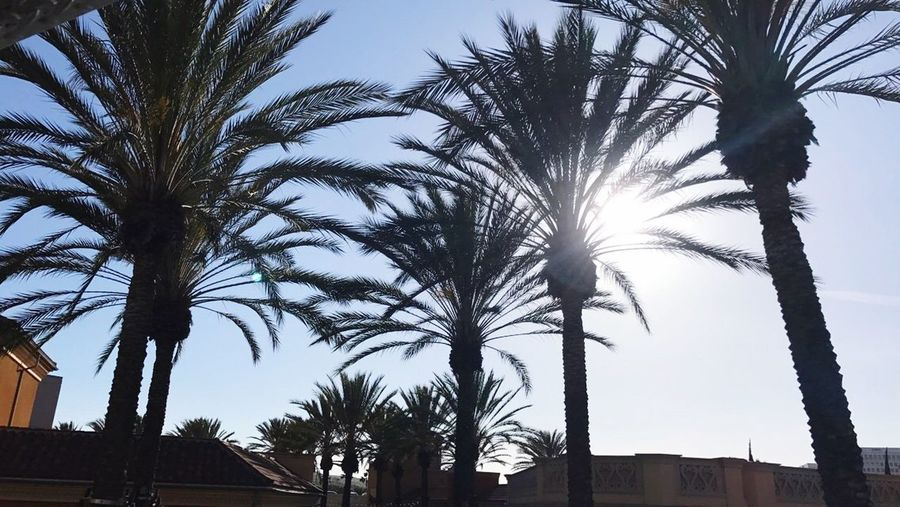 Palm Tree Tree Low Angle View Sky Outdoors No People Tree Trunk Day Growth Built Structure Building Exterior Architecture Beauty In Nature Nature Clear Sky SoCal California