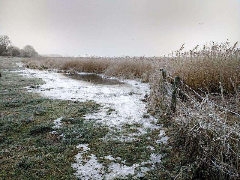 Reeds with ice - Groote Gat - Kaas- en Broodsedijk Sony A700 EyeEm Market © Foggy Frozen Water Ice Nature Reeds Sky The Netherlands Zeeland  Zeeuws Vlaanderen Winter Frost Dike Field