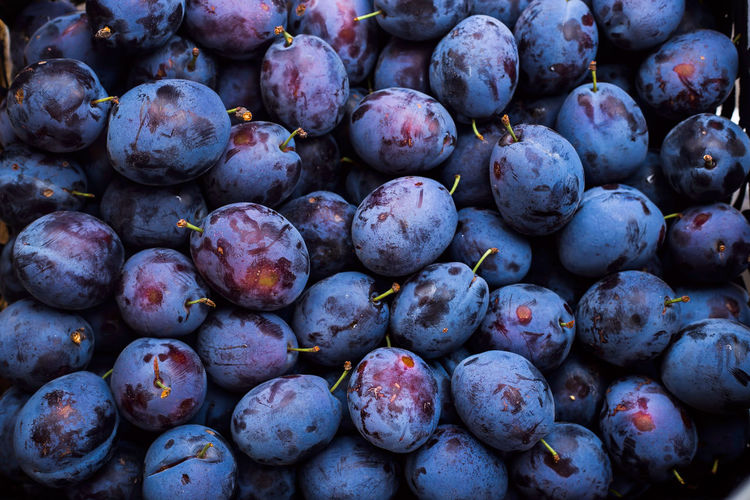 A large box of blue plums on the market.  autumn harvest concept