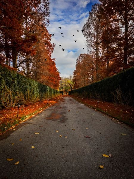 LongwoodGardens Path Fall Sky And Clouds Tree The Way Forward Sky Autumn Nature Change Beauty In Nature Outdoors Scenics Cloud - Sky Tranquility No People Road Day Birds