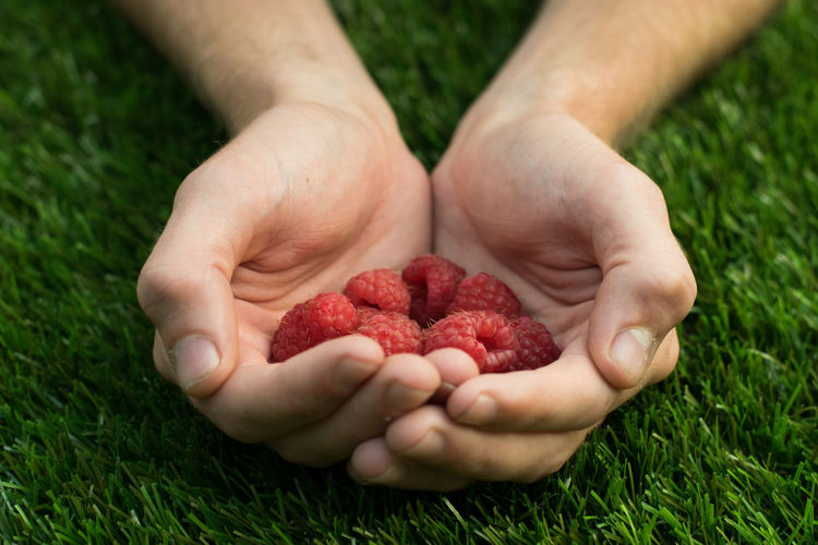 Raspberries Close-up Day Food Food And Drink Freshness Fruit Grass Green Color Hands Cupped Healthy Healthy Eating Heart Holding Human Body Part Human Hand Nature One Person Outdoors People Raspberry Real People Red