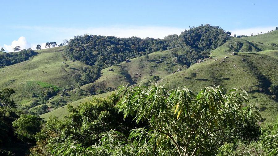 Beauty of Cunha