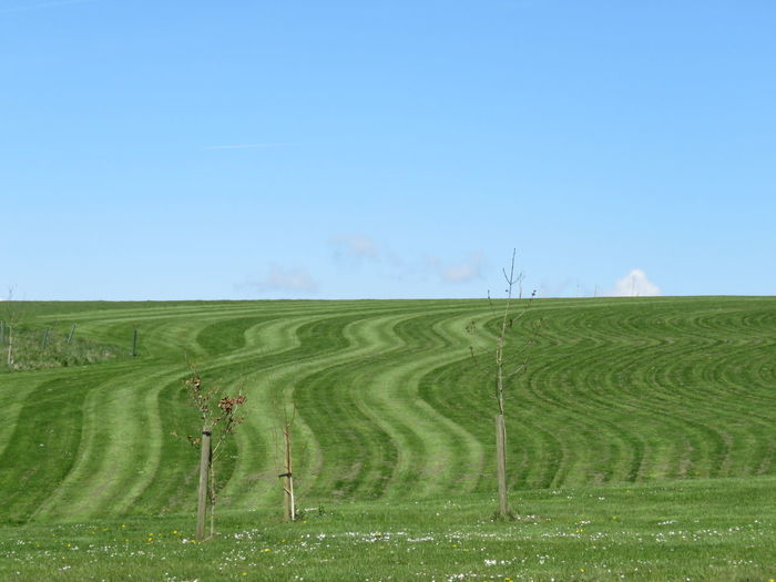 Green field against sky