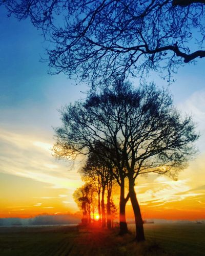 Row of silhouettes of bare trees between the Grassy farmfields in wintertime against a dramatic and colorful sunrise or sunset sky Tree Sunset Sky Plant Beauty In Nature Silhouette Tranquility Cloud - Sky Scenics - Nature Tranquil Scene Branch Orange Color Bare Tree Nature Land Field Outdoors No People Landscape Sun