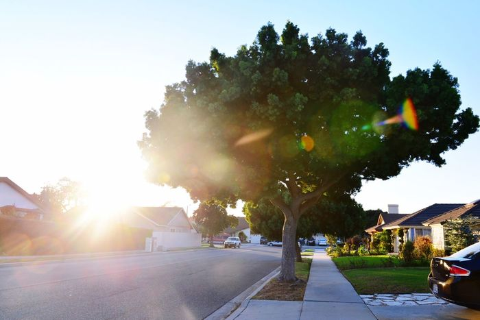 Going For A Walk Sundown Relaxing Enjoying Life Trees Glares Warmth Showcase: December in Oxnard,CA United States