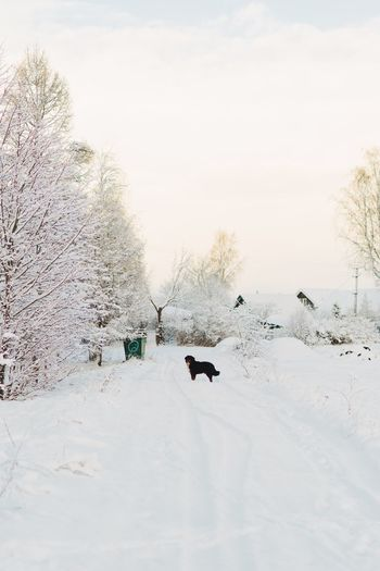 Snow Winter Cold Temperature Animal Themes Animal Tree Vertebrate Pets Domestic Animals Field Nature Sky Group Of Animals Dog Land No People