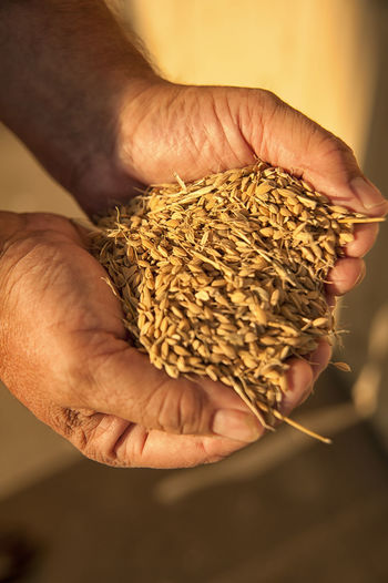 Farmer holding rice Human Hand One Person Hand Holding Real People Human Body Part Focus On Foreground Close-up Food And Drink Unrecognizable Person Food High Angle View Finger Nature Outdoors Rice Texture Sunlight And Shadow Raw Food