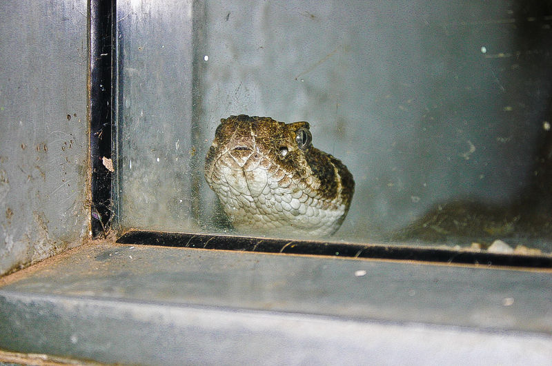Close-up Looking Through Window Snake Snake ♥ Transparent Window Zoophotography