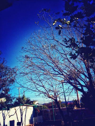 @OtoñoVivo que nos deja ver la belleza en una hoja caída y las ramas secas que aún sostienen el canto de los pájaros