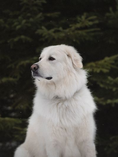 Close-up of white dog by water