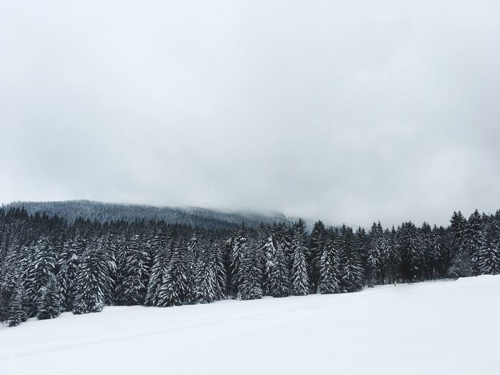 Winter EyeEm Selects Snow Cold Temperature Winter Weather Nature Tranquil Scene Beauty In Nature Scenics Tranquility No People White Color Tree Landscape Sky Cloud - Sky Frozen Outdoors Forest Day