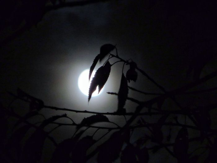 """""""Well, it's a marvelous night for a moondance"""" Moon Silhouette Eye4photography  EyeEm Best Shots"""