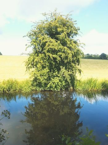 Looking into the dark side... Reflection Reflections Water Canal Trees Tree Wales Welshpool дерево отражение