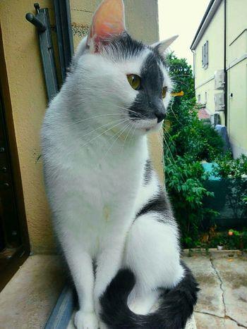 Matisse Mycat♥ Cat♡ Cat