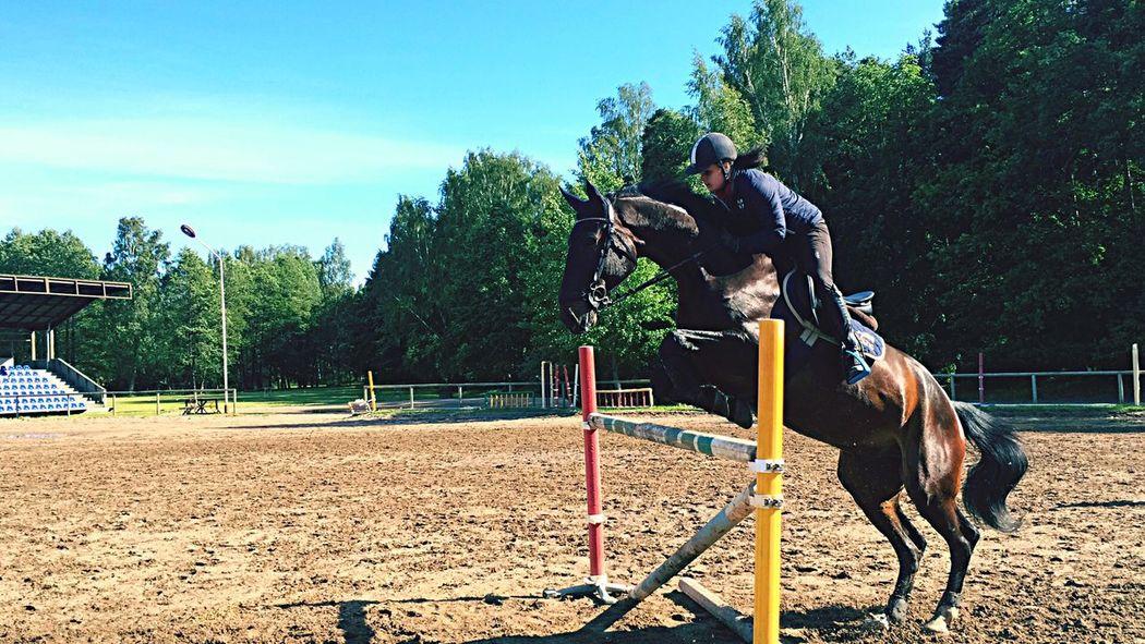 Girl Power Horses Equestrian Life Jumping Flying High 130 First Eyeem Photo