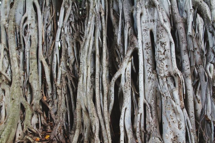 Trunk Tree