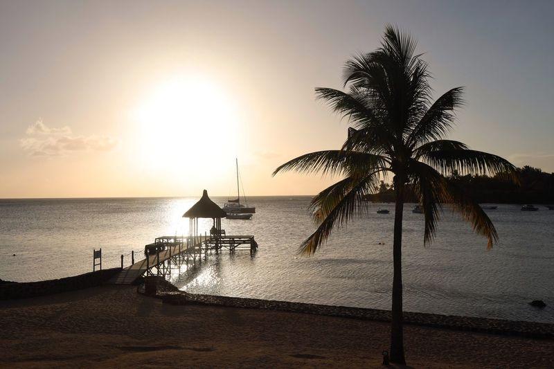 Sunrise at Mauritius Sunset Mauritius Island  Mauritius Palm Tree Palm Water Sky Sea Beauty In Nature Horizon Beach Horizon Over Water Silhouette Idyllic Plant Real People Sun Sunlight Tree Land Tranquility Nature Tranquil Scene Sunset Scenics - Nature
