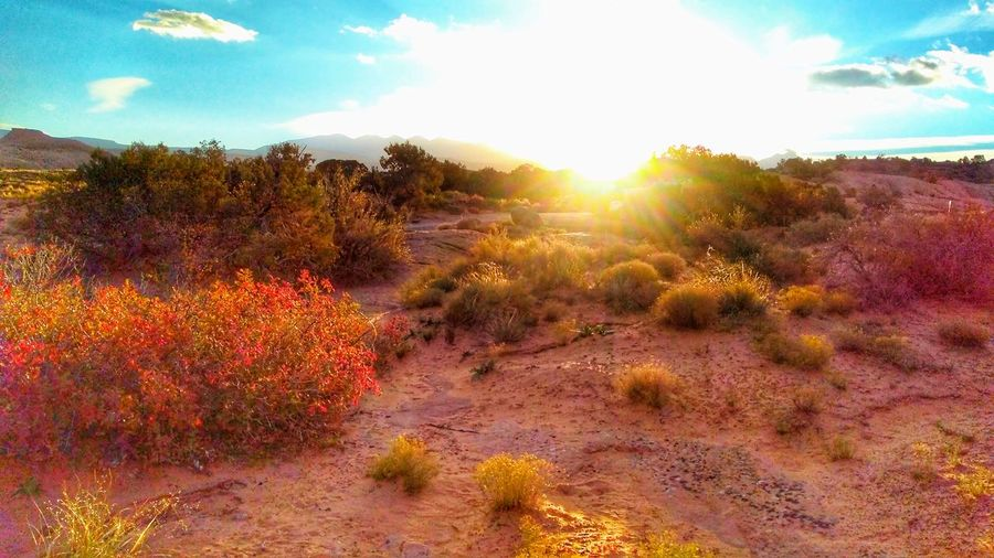 Desert Sunrise Desert Photography The Desert🌵 The Week On EyeEm EyeEm Gallery Popular Photographs Landscape Cloud - Sky Scenics Multi Colored Beauty In Nature Outdoors Day Tree Arid Climate Extreme Terrain Travel Destinations Sunlight Shadows & Light Sunrise - Dawn Perspectives On Nature