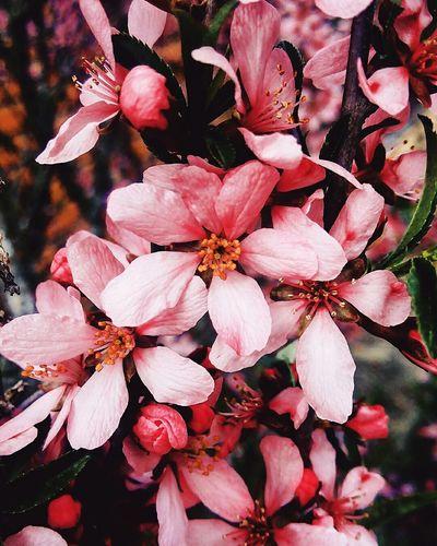 Всем доброе утро!) 😊😉 Природа красиво весна сакура розовый ветка ярко солнечно ярко макро Nature Beauty Beauty In Nature Spring Branch Bright Sunny Macro Pink Colorful Красочно Pocket_allnature Nature_collection Nature_perfection Flowers