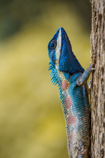 Close-up of lizard on tree