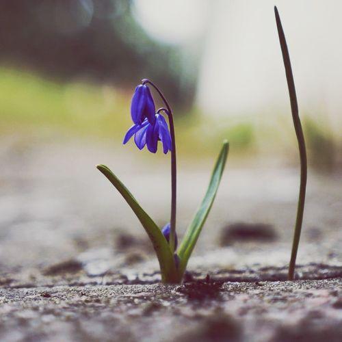 Es wird langsam Frühling in unserem Garten. First Eyeem Photo