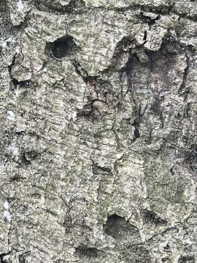 Tree Bark Full Frame Textured  Backgrounds Close-up No People Cracked Nature Outdoors Tree Day Beauty In Nature Abstract Rough EyeEmNewHere The Minimalist - 2019 EyeEm Awards