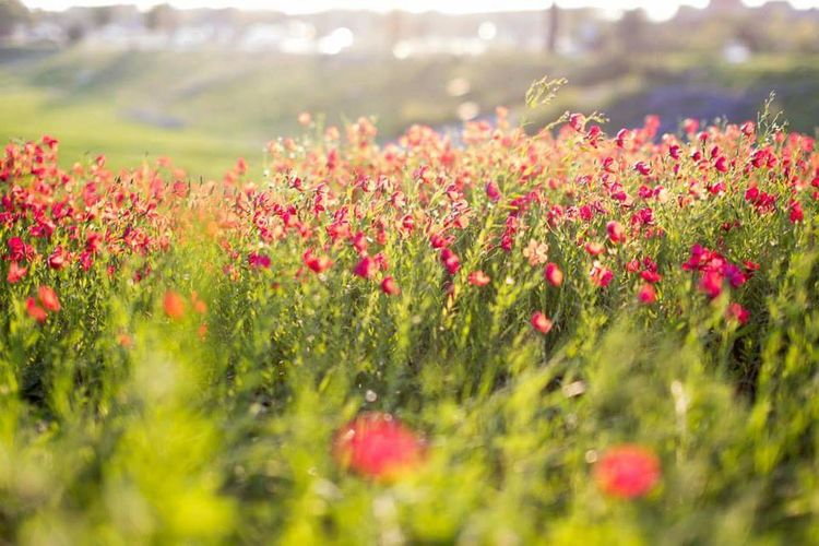 Close-up of multi colored flowers on landscape
