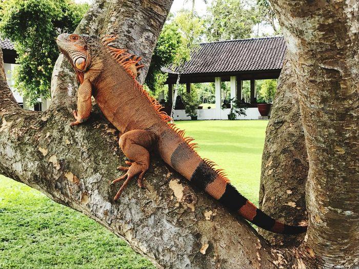lizard on java Animal Themes Animal Animals In The Wild Vertebrate One Animal Animal Wildlife Day