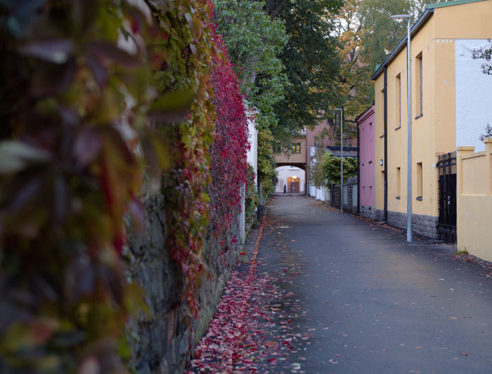 My favourite alleyway in Helsinki City Diminishing Perspective Street House Residential District Footpath Direction The Way Forward Building Exterior Architecture Asphalt Vines And Leaves Vines And Leaf Vines On Wall Vines Vine Plant Wall Colourful Colorful Alleyway Alley Autumn Leaves Autumn Colours Autumn Gh5