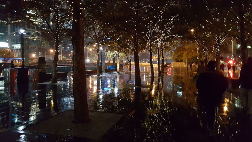 Reflection Outdoors City Night Tree Illuminated Wet
