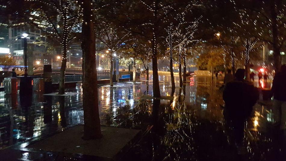 Reflection Outdoors City Night Tree Illuminated Wet