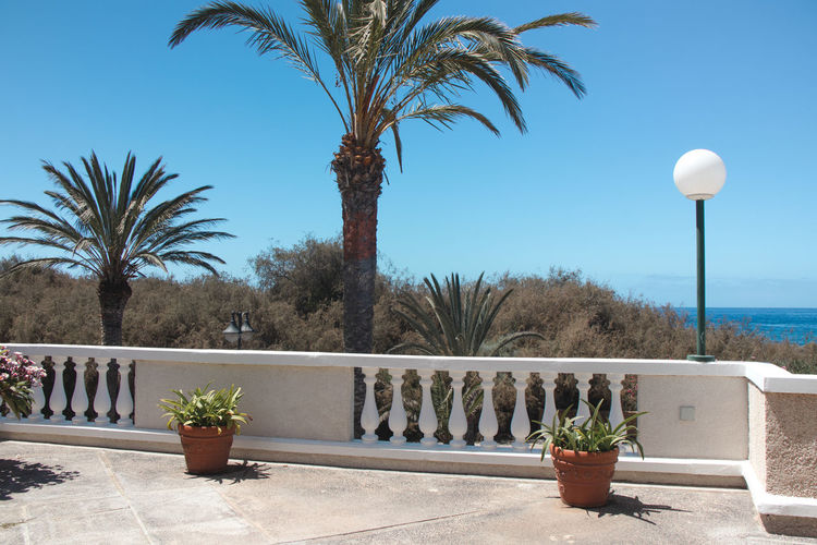 Potted plants by sea against clear sky