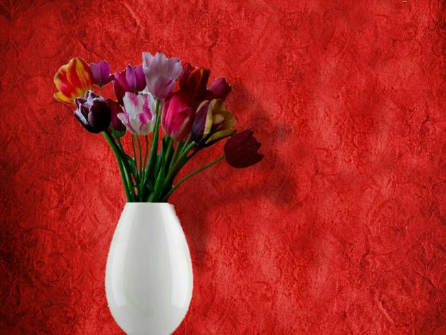 Flower Red Flower Head Tulip No People Vase Of Flowers Freshness Bluming Valentine's Day  Art Photography EyeEmNewHere