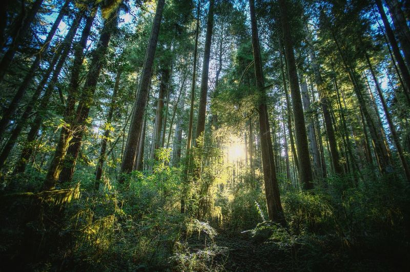 Dreaming of the Redwood sun.