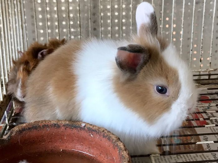 Rabbit Animal Themes Pets Domestic Animals One Animal Cage No People Close-up