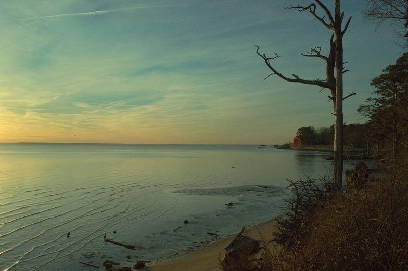 Bare Tree Beach