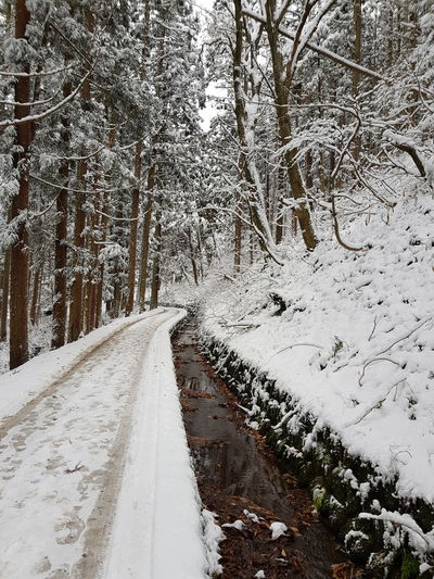 lonely walk Snow Road Winter The Way Forward Day Outdoors No People