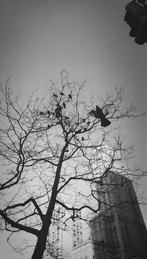 Black And White Sky Urban Nature New York City