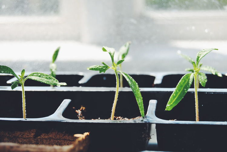 Close-Up Of Small Plant Growing In Seedling Tray
